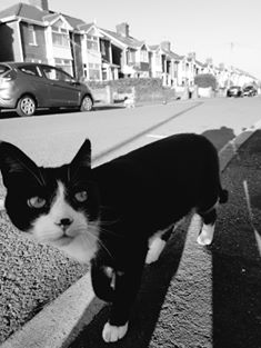 A black and white cat. An empty street in the backgroun.